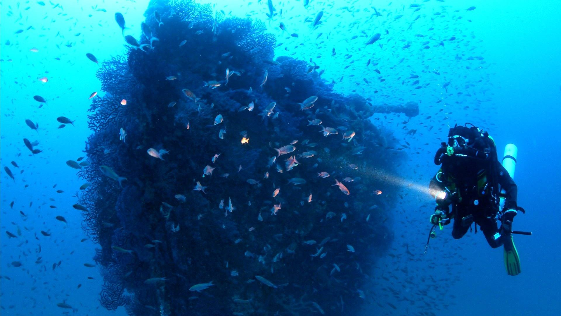 Plongée Et Spots De Plongées Dans Le Var Visitvar