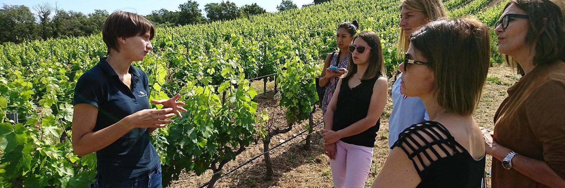 Guided tours in the vineyards at Roquebrune sur Argens