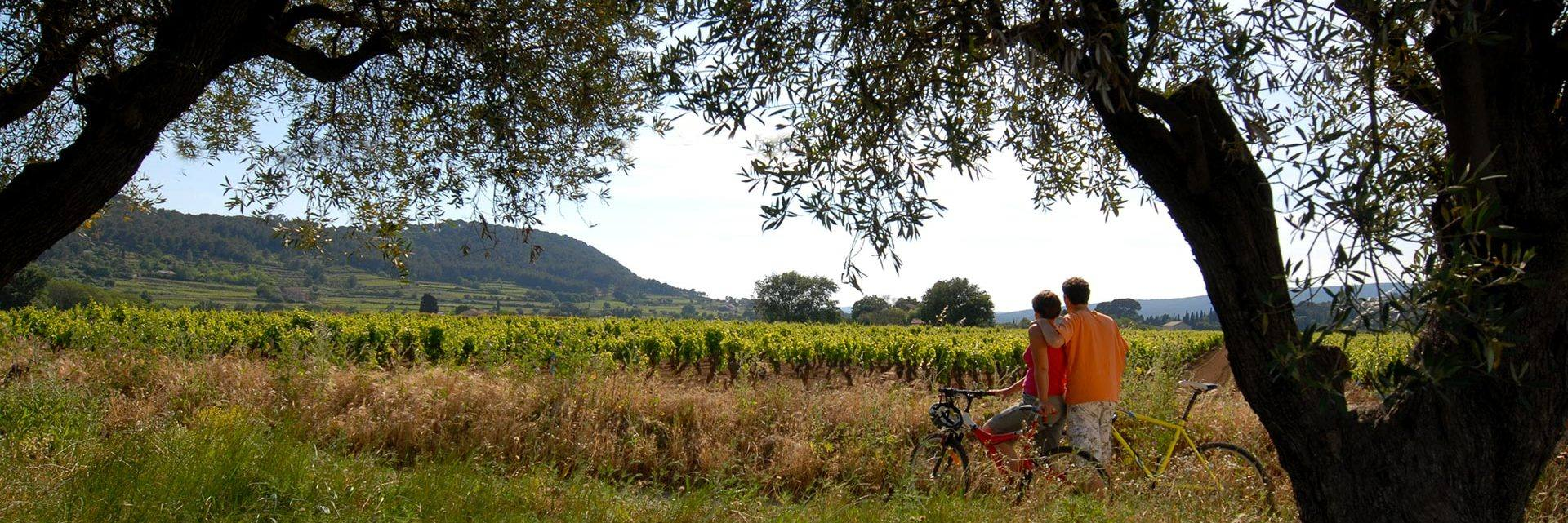 Bicycle in the Castellet vineyards