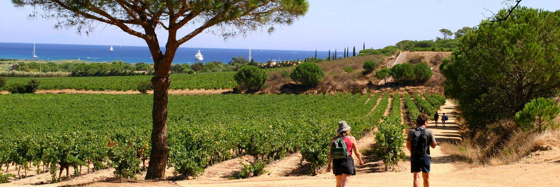 Walking between the vineyards and the sea - La Croix Valmer