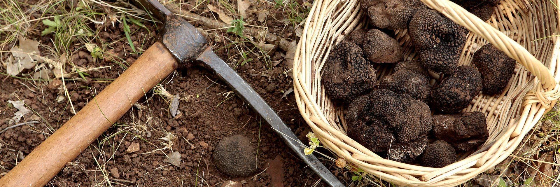 Var truffles
