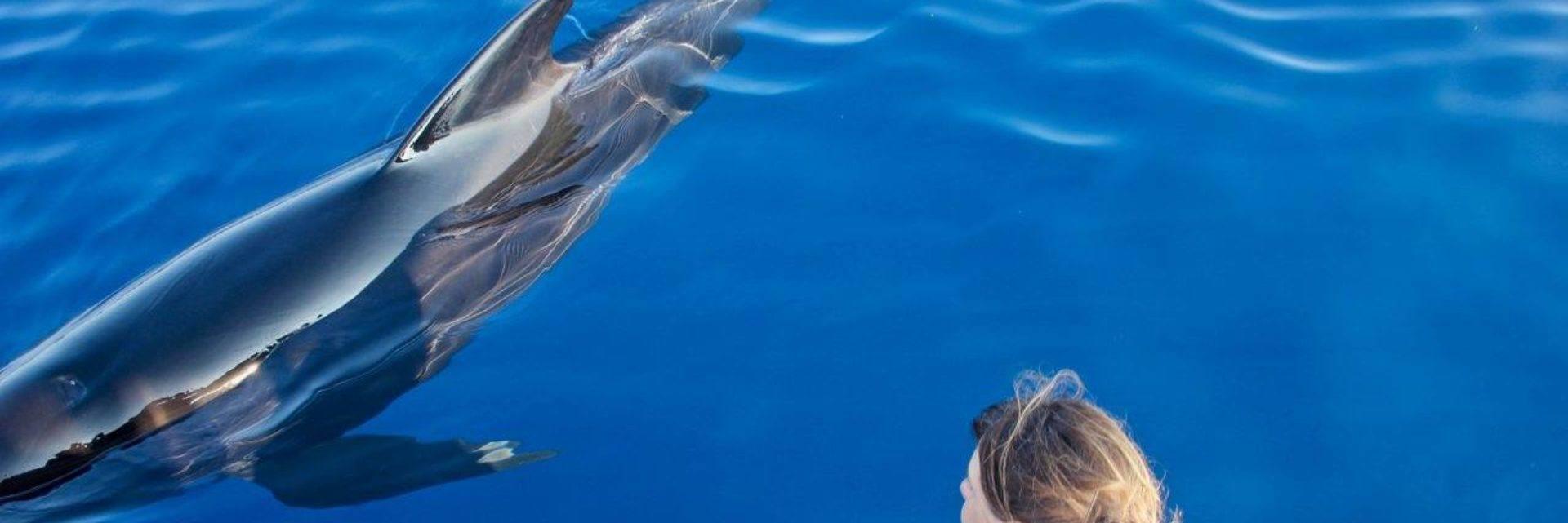 Vertical Horizon - Observation des baleines et dauphins